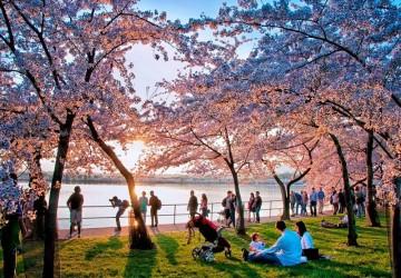 10 địa điểm ngắm hoa anh đào đẹp trên thế giới đầu năm 2019
